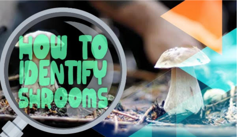 how to identify shrooms